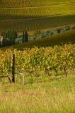 Wineyard en Chianti en Toscana fotos de archivo