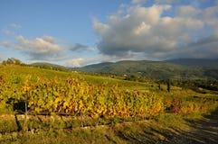Wineyard en Chianti en Toscana foto de archivo libre de regalías