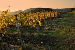 Wineyard en Chianti en Toscana imagen de archivo