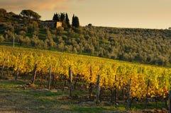 Wineyard en Chianti en Toscana foto de archivo