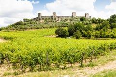 Wineyard en Toscane image stock