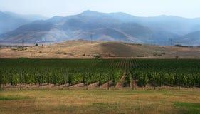 Wineyard hills Stock Images