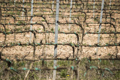 Wineyard i Spanien Royaltyfri Fotografi