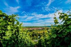 Wineyard nära Volkach Royaltyfria Bilder