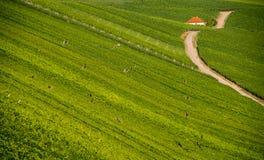 Free Wineyard Near Volkach Stock Photos - 33256263