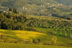 Wineyard no Chianti em Toscânia imagem de stock