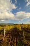 Wineyard no Chianti em Toscânia imagens de stock royalty free