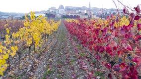 Wineyard placerade i La Rioja Spanien Royaltyfri Fotografi