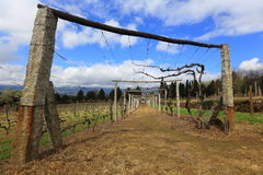 Wineyard rods. Production of wine in Portugal Royalty Free Stock Photos