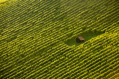 Wineyard stuga under vinrankarader Arkivbilder