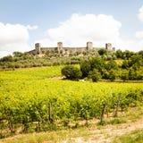 Wineyard in Tuscany royalty free stock photo