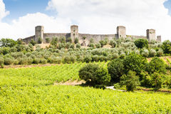 Wineyard in Tuscany Royalty Free Stock Photography