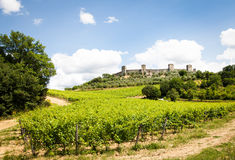 Wineyard in Tuscany Royalty Free Stock Images