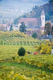 Wineyard and Village Royalty Free Stock Images