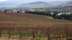 Wineyard in the winter Royalty Free Stock Photos