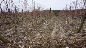 Wineyard in the winter Stock Photos