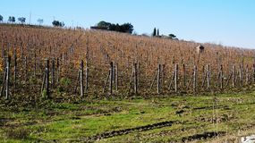 Wineyard in the winter Royalty Free Stock Image