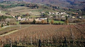 Wineyard in the winter Stock Images