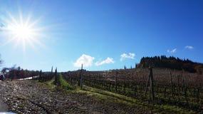 Wineyard in the winter Stock Photo