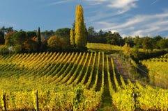 Wineyards在托斯卡纳, Chianti,意大利 库存照片