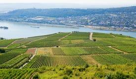 Wineyards在Rudesheim上午莱茵 库存图片