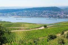 Wineyards在Rudesheim上午莱茵 库存照片