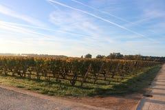 Wineyards στην ανατολή - Sauterne, Γαλλία στοκ φωτογραφίες με δικαίωμα ελεύθερης χρήσης