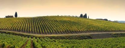 Wineyards в Тоскане, Chianti, Италии стоковые фотографии rf