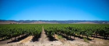 Wineyards 免版税库存图片