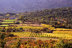 Wineyards Royalty Free Stock Photo