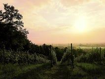 Wineyards Stockfotos