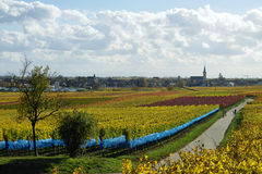 Wineyards allemands Photo stock