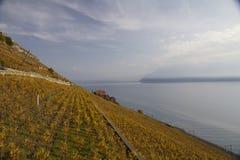 Wineyards coloridos fotos de archivo