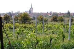 Wineyards in de lente stock foto's