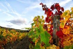 Wineyards em Toscânia, Chianti, Itália foto de stock royalty free