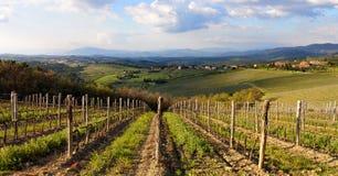 Wineyards em Toscânia, Chianti, Itália imagem de stock royalty free