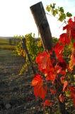 Wineyards en Toscana, Chianti, Italia Imagen de archivo libre de regalías