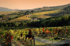 Wineyards en Toscane, chianti, Italie photos stock