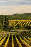 Wineyards en Toscane, chianti, Italie photo stock