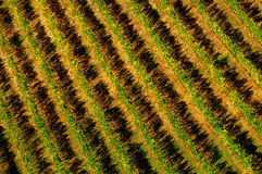 Wineyards en Toscane, chianti, Italie photographie stock