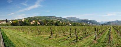 Wineyards för Veneto regionsommar Arkivfoto