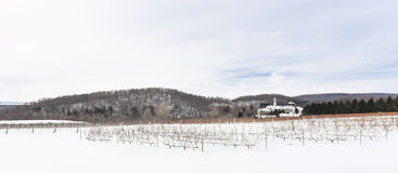 Wineyards fields during winter in Oka, Quebec, Canada. Wineyards during winter in Oka, Quebec, Canada stock photo