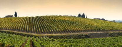 Wineyards i Tuscany, Chianti, Italien royaltyfria foton