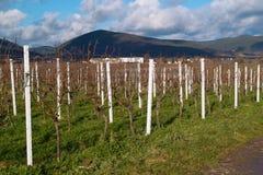 Wineyards im Herbst Lizenzfreies Stockbild