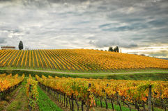 Free Wineyards In Autumn In Tuscany, Chianti, Italy Stock Photography - 76127732