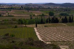 Wineyards landscape in the south of France Stock Photo