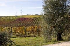 Wineyards Reihen lizenzfreie stockfotos
