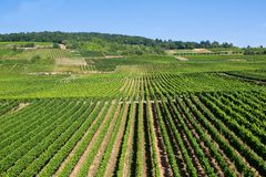 Wineyards in Rudesheim am Rhein Stock Image