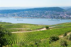 Wineyards in Rudesheim am Rhein Stock Photos