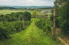 Wineyards in Tihany peninsula at lake Balaton, Hungary Stock Image
